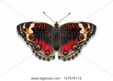 Red Color Blue Pansy Butterfly