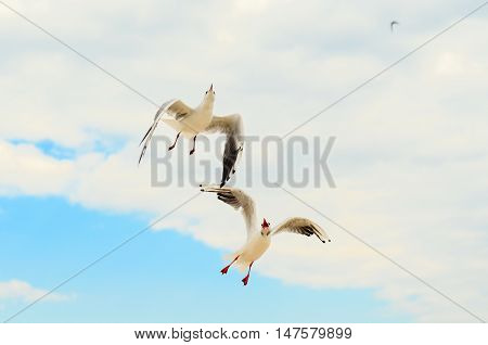 Two Seagull in the blue sky. Funny frame. Black Sea Coast.