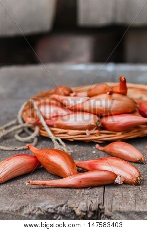 Shallot Onions On An Old Wooden Table. A Rustic Style. Selective Focus