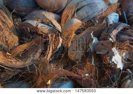 background of coconut spathe fiber on the ground , texture from nature