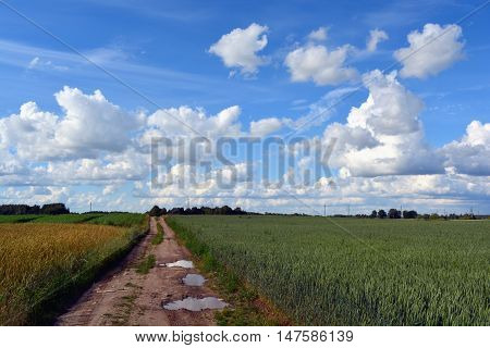 Country road through the fields on sunny cloudy summer day