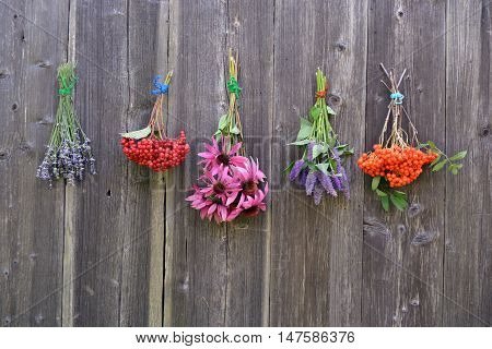 Bunches of medical healthy herbs and berries on wooden barn wall background
