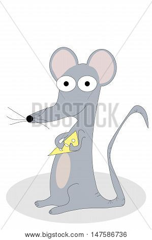 Grey mouse holding wedge of swiss cheese on white.