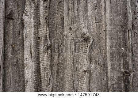 high resolution old natural wood textures.  Abstract background, empty template.