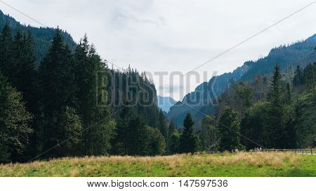 View of a Koscielisko Valley in polish Tatras Poland.