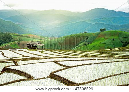 Terraced Rice Field in Thailand nature rice field