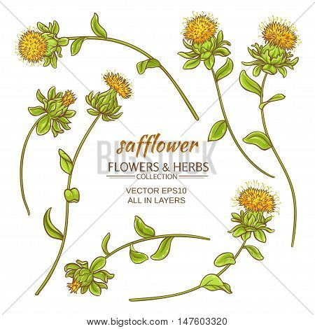 safflower plant vector set on white background