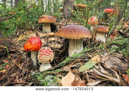 Variety Of Mushrooms Grown Up Together In The Woods