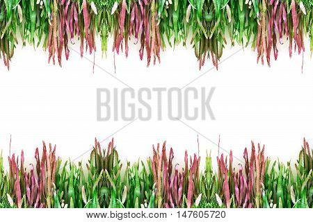 The beautiful decorative plant on the modern wall isolated