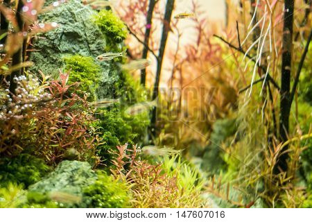 Close Up Beautiful Aquarium Tank With Many Aquatic Plants