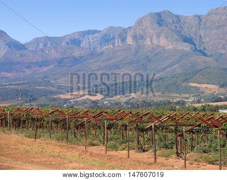 Grape Farm, Paarl, Western Cape South Africa 04b