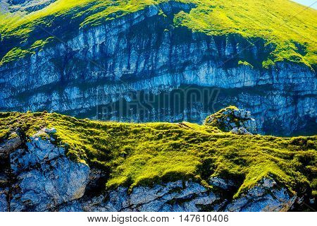 beautiful details of alpine mountain landscape on bright summer day