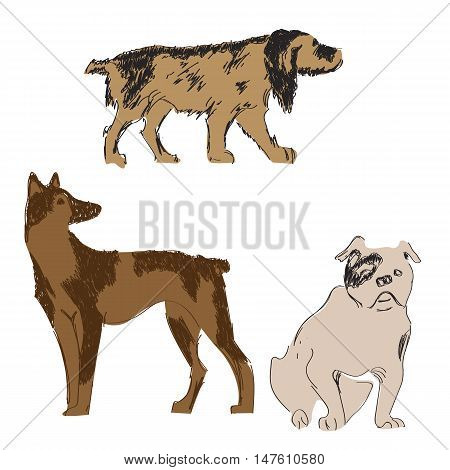 Breeds of dogs set, sketch, hand drawn illistration over white background