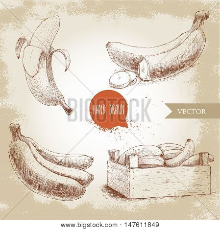 Hand drawn set of fresh ripe bananas.Wooden crate with bananas on a vintage background. Sketch style illustration.