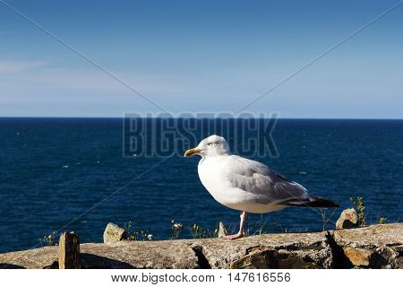 Seagull On Wall Over Looking The Sea