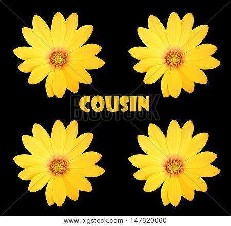 Abstract creative floral cousin greeting card scene
