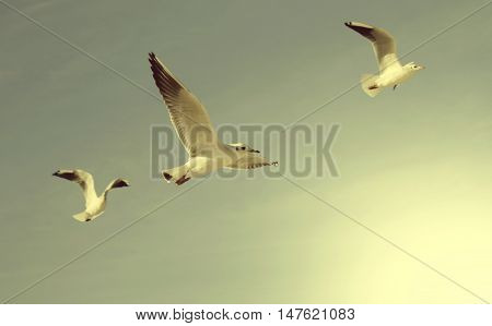 seagulls on the sky, shallow depth of field, toned photo