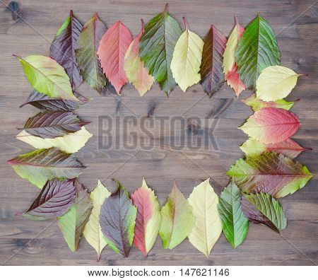 wild grapes multicolored autumn leaves on wooden background