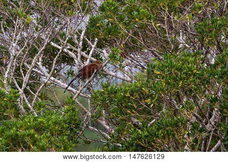 Medium Size Brown Bird