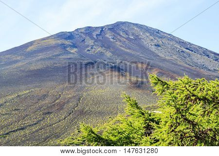 Fuji Mountain Without Snow With Pine Trees And Blue Sky