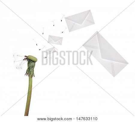 old dandelion and flying envelopes isolated on white background
