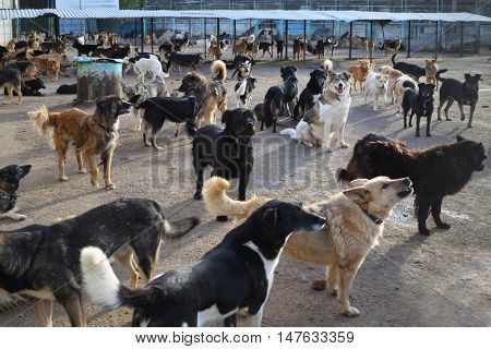 Many stray dogs go, stand, lie in yard in asylum at autumn sunny day