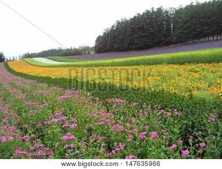 Multi Color Botanical Garden in Hokkaido Island of Japan