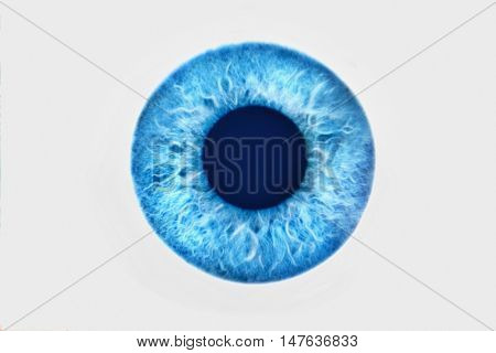Closeup of blue eyeball on white background