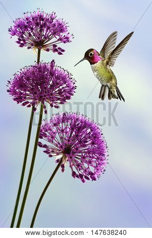 Tiny exotic hummingbird over blurred summer background