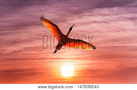 Bright sky on sunset or sunrise with tropical bird nature background