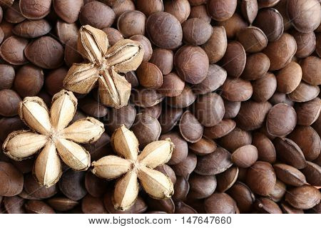 Legumes of Sacha inchi or Inca peanut for design concept health care of tropical herbs.