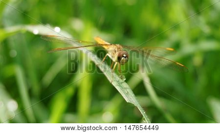 dragonfly on nature green bokeh background in the morning