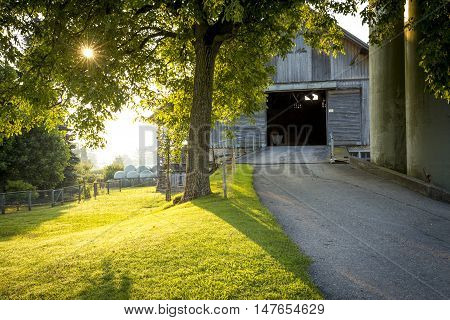 Wooden shed and a meadow in the morning light