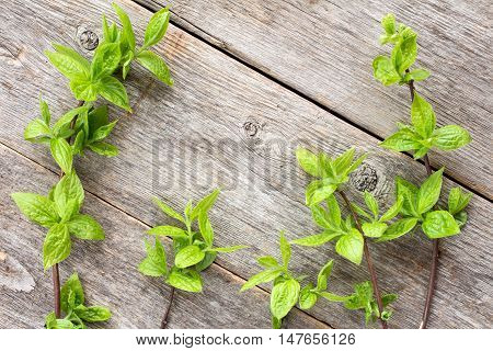 Green plants on wooden background. Top view with copy space.