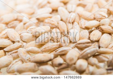 pearl barley close-up on a white background