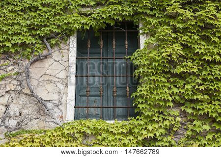 Old window with closed shutters on the window sill with ivy on the the stone wall. Italian Village.
