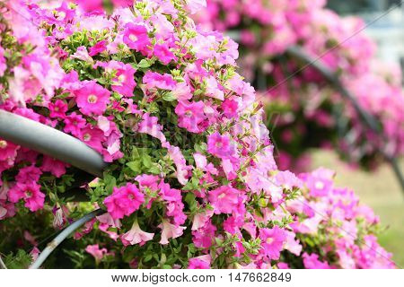 Beautiful arches made of flowerbeds, closeup
