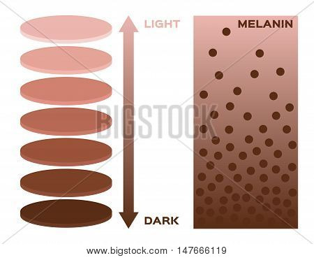 skin color and melanin index , infographic vector . 3 chart . dark to light skin