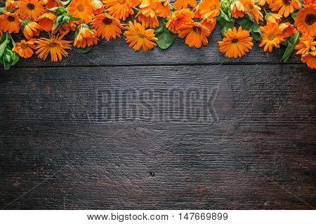 Frame of calendula flower heads on the dark wood surface