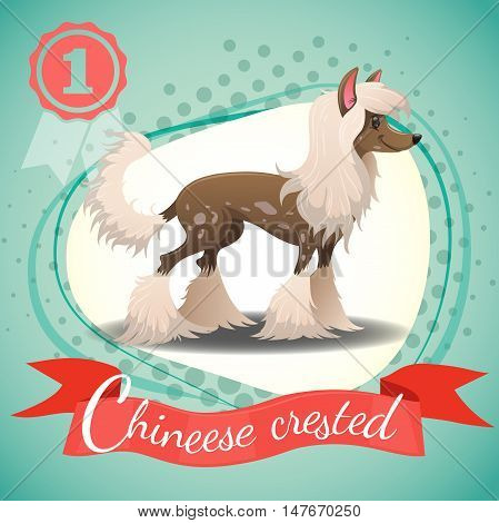 Chinese Crested Dog standing. Colorful background with halftone dots. Champion medal. Best in show. Vector illustration.