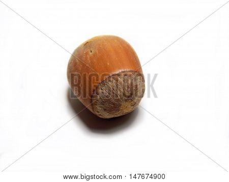 Isolated hazelnut on white background, healthy nut food in nutshell