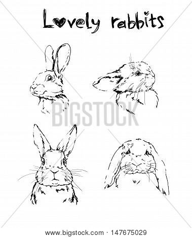 rabbit, cute hare, rabbit sketch illustration set