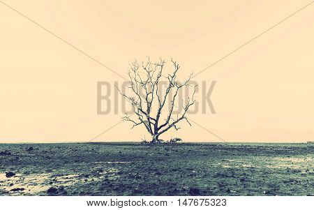 Abstract background retro tone Dead tree on the beach