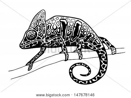chameleon isolated ink hand drawn vector illustration