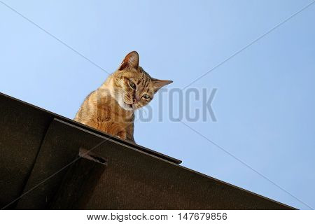 Funny Cat Pictures Cat sitting on the roof and Looking