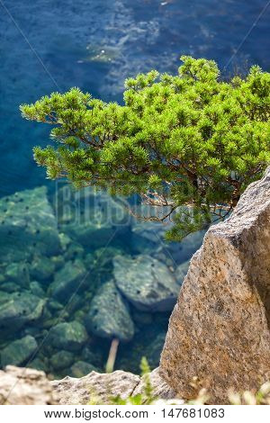 Pine-tree on a rock at the sea in the morning light