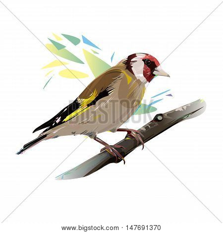 Goldfinch on a branch, isolated vector illustration