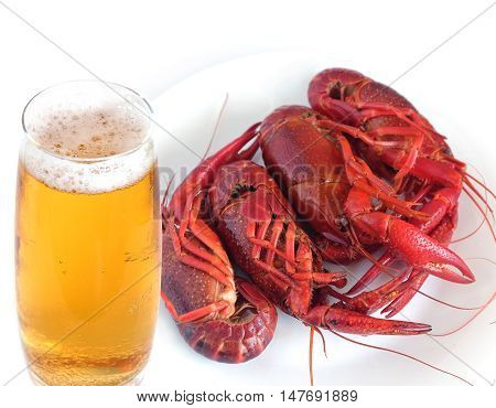 Four boiled crayfish color red and glass of amber beer studio shot isolated on white top view close-up