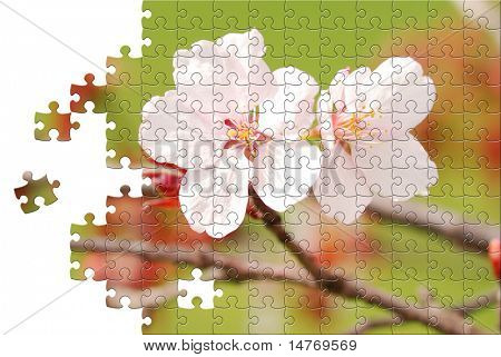 Puzzle Sakura spring blossoms, shallow DOF