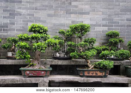 Potted bonsai trees on a stone bench within the six Banyan tree buddhist temple in Guangzhou China.